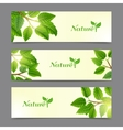 Green leaves eco banners set vector image vector image