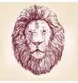 lion hand drawn realistic sketch vector image