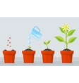 Plant growing stages Timeline infographic of vector image