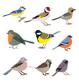 set of beautiful multi-colored birds on a white vector image vector image