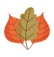 autumn leaves foliage plant isolated design white vector image