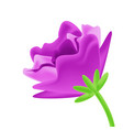 close-up purple flower element decor isolated for vector image