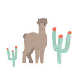 cute llama or cria isolated on white background vector image vector image