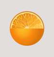 orange fruit isolated vector image vector image