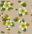 seamless spring background with white flowers with vector image