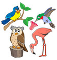 various birds collection 02 vector image vector image