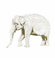 african safari animal indian elephant hand drawn vector image