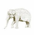 african safari animal indian elephant hand drawn vector image