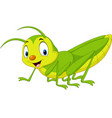cartoon happy grasshopper vector image vector image