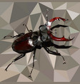 stag beetle brown bug on a grey background vector image