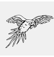 Hand-drawn pencil graphics parrot macaw Engraving vector image