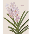 painted pink orchids vector image vector image