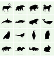 Polar animals vector image