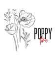 poppy flowers decorative print nature vector image vector image