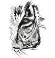 sketch of tiger face vector image vector image