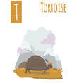 Vertical of tortoise walking in the mountain
