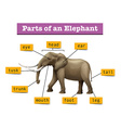 Different parts of wild elephant vector image vector image