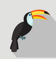 toucan cartoon flat icon brazil vector image