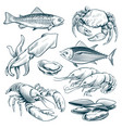 sketch seafood lobster shellfish fish shrimp vector image vector image
