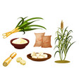 sugar cane isolated icons set sugar cube vector image