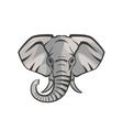 Elephant portrait vector image
