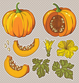 botanical set with isolated pumpkins flow vector image
