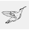 Hand-drawn pencil graphics colibri bird Engraving vector image