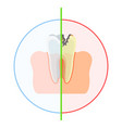 healthy vs damaged tooth vector image vector image