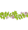 oregano branch pattern vector image