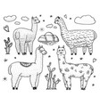 set of cute alpaca llamas or wild guanaco on the vector image