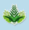 bunch natural tropical leaves botanical card vector image vector image