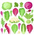 cartoon cabbage cauliflower kale broccoli and vector image