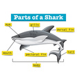 Diagram showing parts of shark vector image