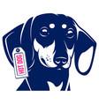dog dachshund hot dog vector image vector image