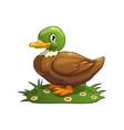 Duck vector image