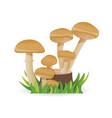 edible mushrooms growing on a stump vegetable vector image vector image