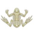 Frog skeletal system vector image vector image