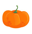halloween pumpkin symbol template isolated vector image