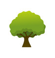 isolated simple shady tree plant vector image
