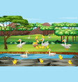 scene with ducks and chicks in field vector image vector image