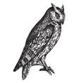 scops eared owl vintage vector image vector image