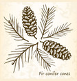 fir conifer cones set vector image