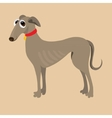 South Russian Hound of a dog vector image vector image