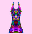colorful doberman portrait vector image vector image
