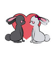 couple rabbit heart lovely design vector image