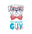 cute pug dog t-shirt print design cool animal vector image vector image