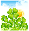 landscape with four leaf clovers vector image vector image