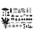 leaves tropical jungle silhouette set vector image vector image