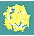Narcissus yellow ball vector image