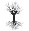 Old deciduous tree with the roots vector image vector image